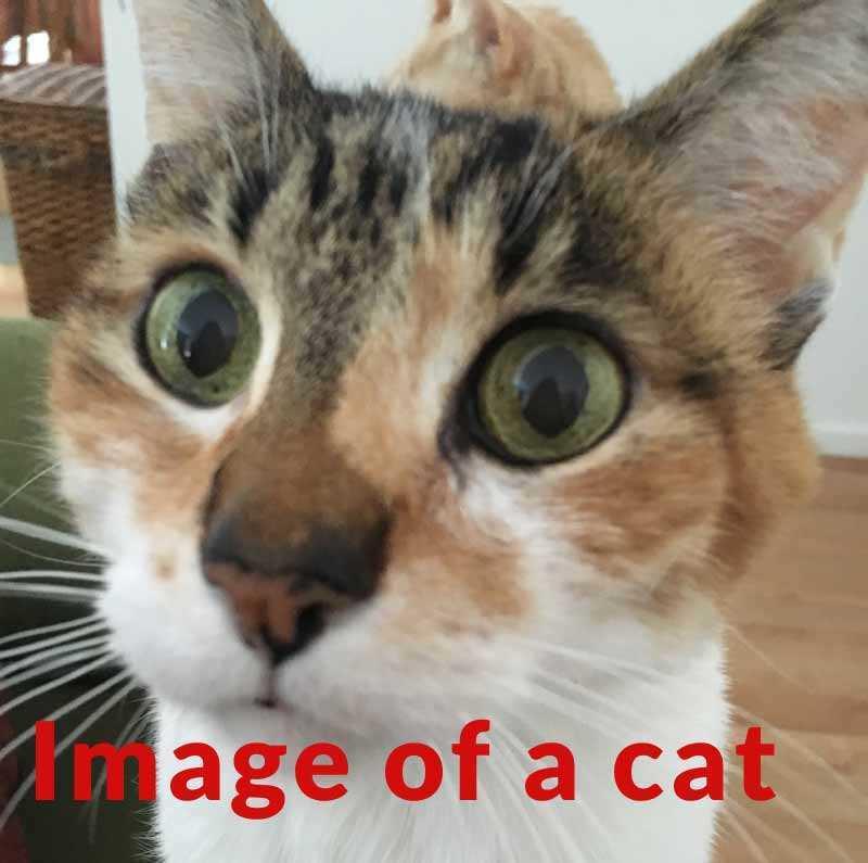 7种图像可以提升排名