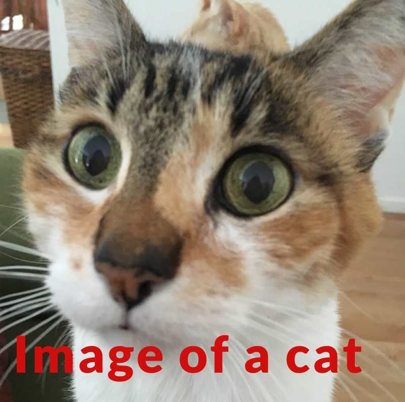 图像展示了在摄影图像上容纳措辞的大小必须多大
