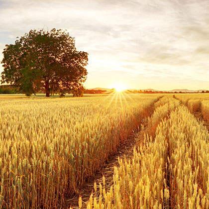 SEO就像农业